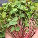 Comment cultiver vos micro-pousses ?