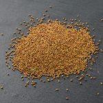graines Alfalfa