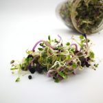 Comment faire vos graines germées ?